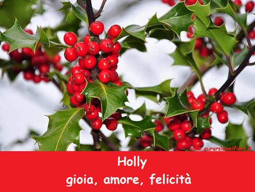 Holly 2