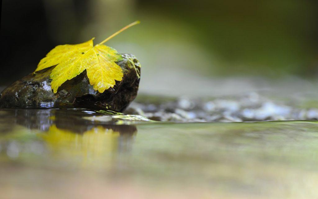 leaf_rock_water_liquid_49809_1680x1050