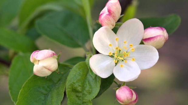 Una formula di fiori di bach per la psoriasi