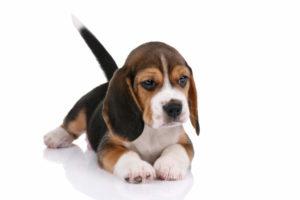Fiori Di Bach Per Gli Animali Il Cane Traumatizzato Curarsi Con I